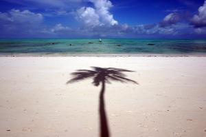 jambiani-beach-view-palm-tree