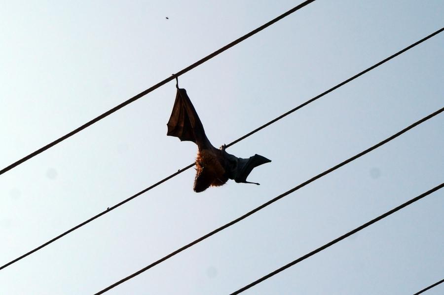 electrified-bat