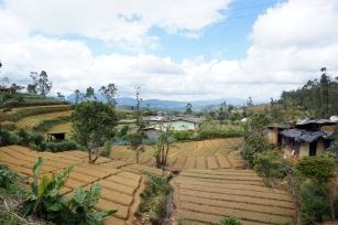 The view from the train in Nuwara Eliya