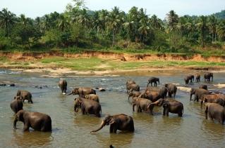 Pinnewala Elephant Orphange