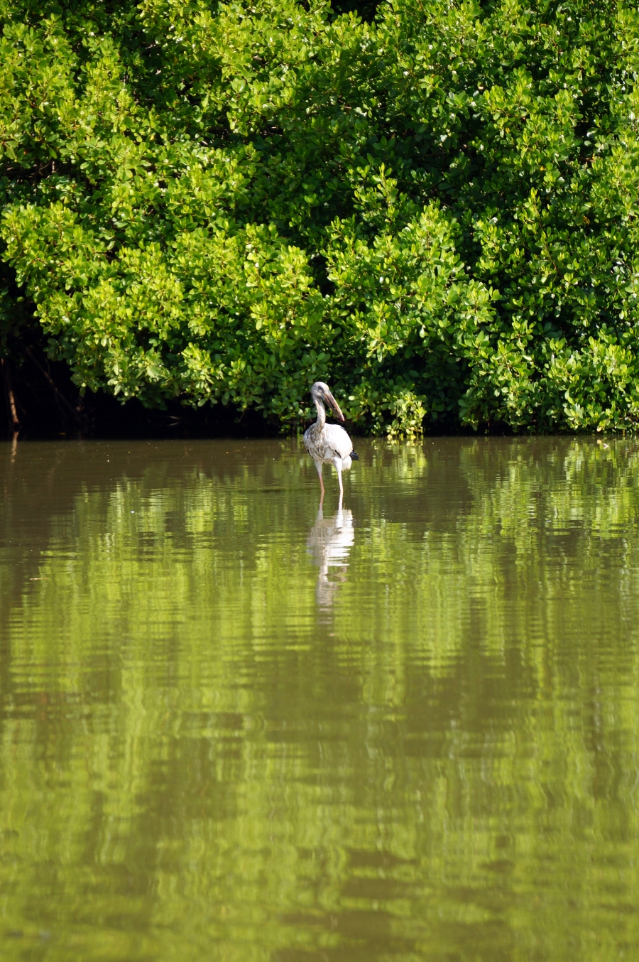 tangalle-lagoon-wildlife-01