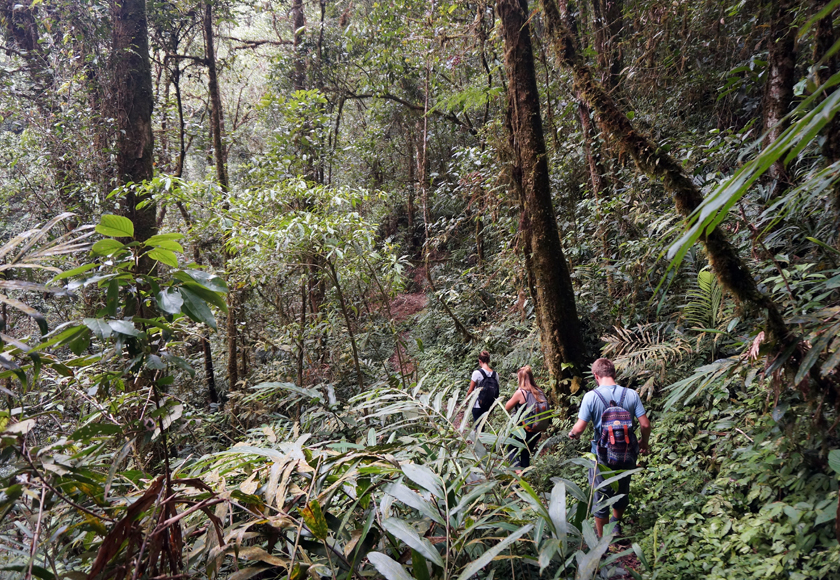 kinabalu-national-park-jungle-trek-01-840