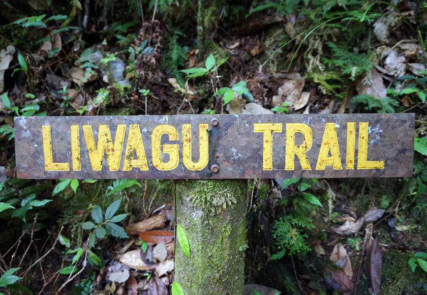 kinabalu-national-park-jungle-trek-02-840