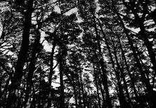 Mt Victoria Forest