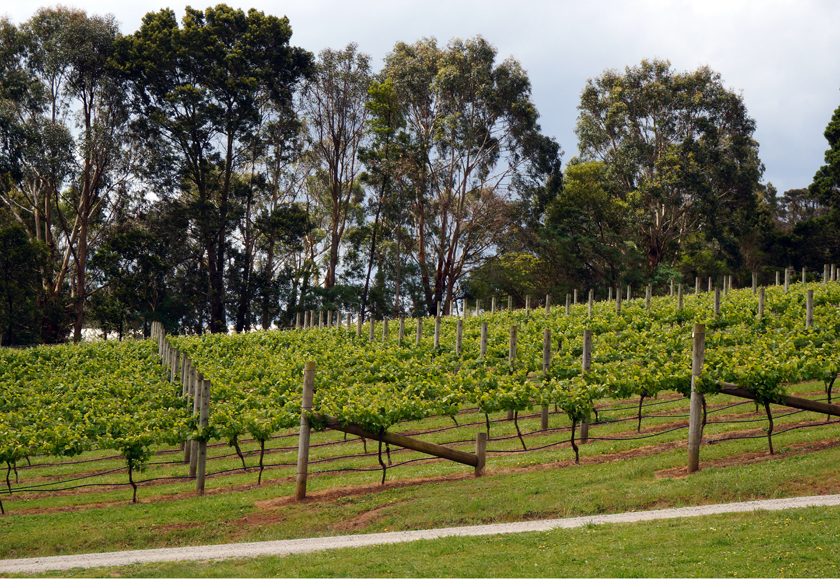 mornington-green-olive-red-hill-02-840