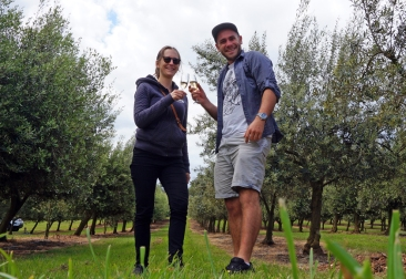 In amongst the Olive Trees