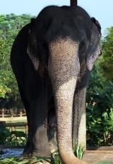 pinnawela-elephant-chains-01