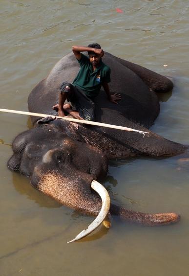 pinnawela-elephant-mahout-01
