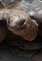 zanzibar-tortoise-01-profile
