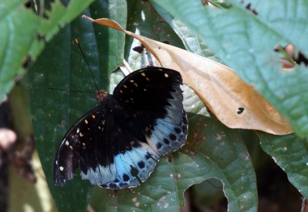 pai-jungle-butterfly-02-840