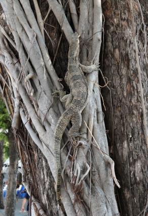 bangkok-lizard-01-740