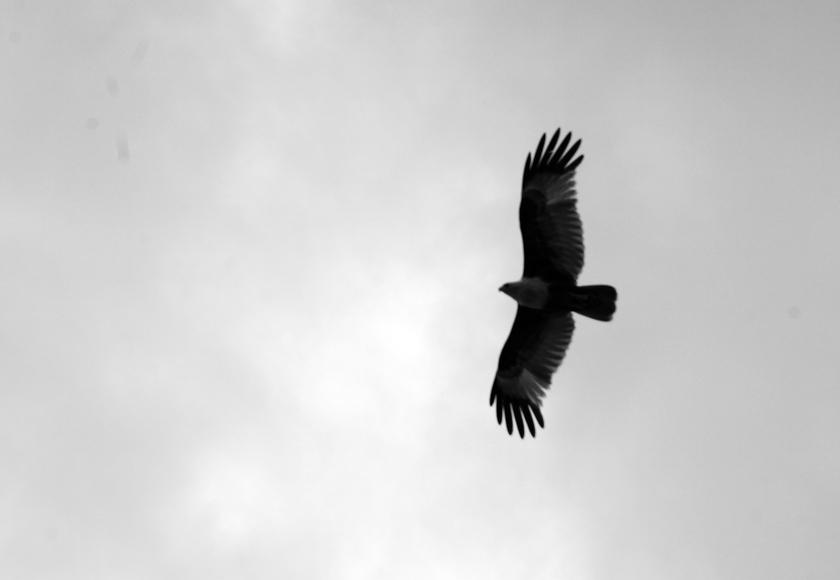 koh-lanta-eagle-02-bw-840