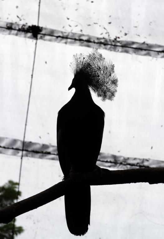sing-zoo-bird-01-740