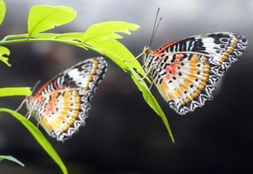 sing-zoo-butterfly-01-840