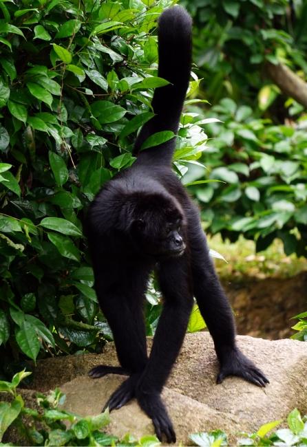 sing-zoo-monkey-01-740