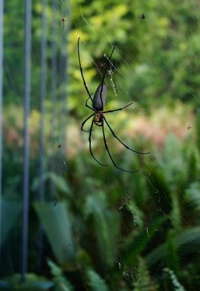 mossman-gorge-spider-01-740