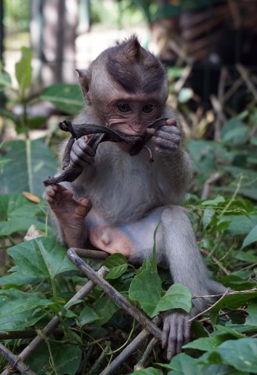 monkey-forest-02-740