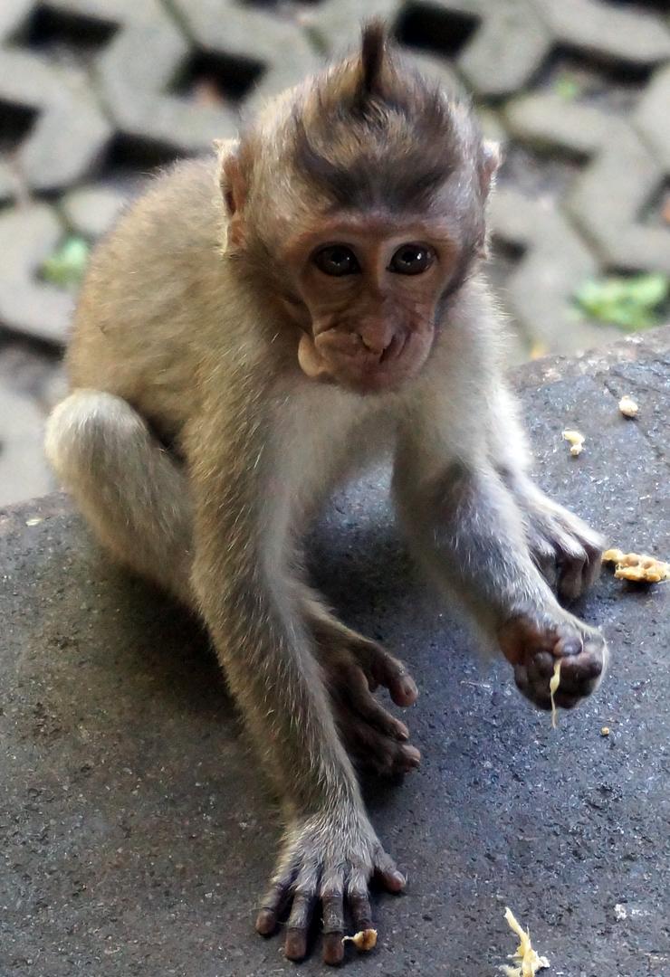 monkey-forest-03-740
