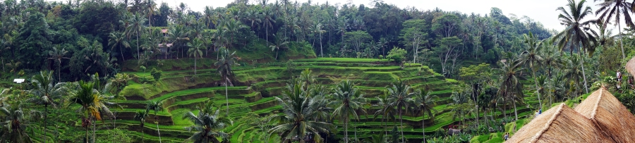 tegalalang-rice-terraces-pano