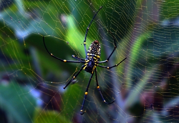 ubud-spider-01-840